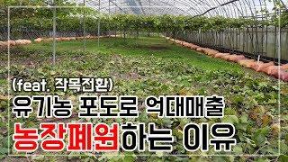 [작목전환] 고심 끝에 유기농포도 규모 축소 결정!