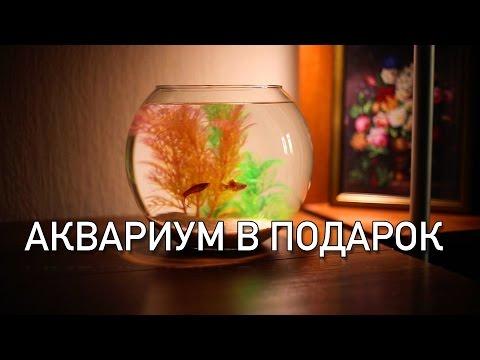 Оформляем аквариум Tetra Cascade Globe. Секреты мастерства.