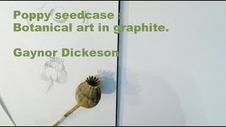 How to draw a Poppy seedcase in graphite  - Gaynor Dickeson