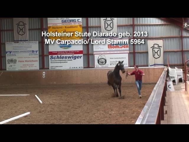 Holsteiner mare by Diarado born 2013