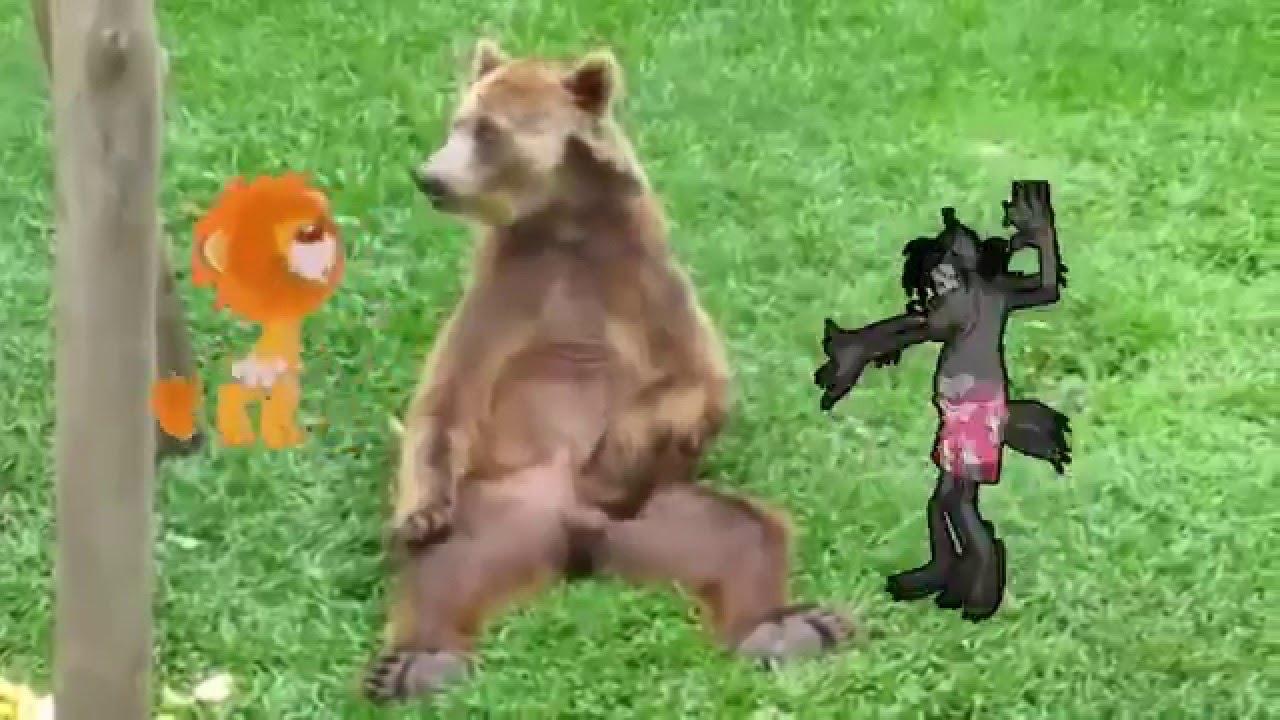 Медведедем секс