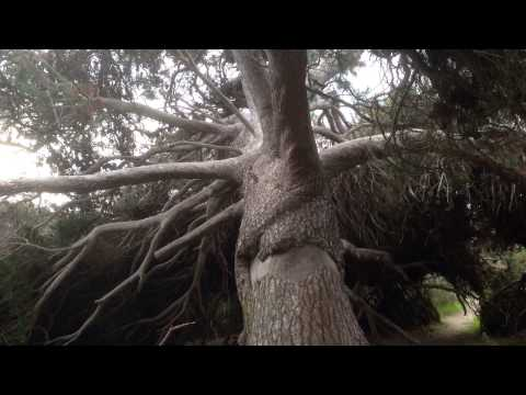 Granite Island Victor Harbour Adelaide South Australia walking site seeing hiking day trip