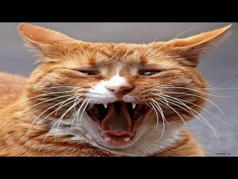 Ваш кот будет в шоке от этого крика