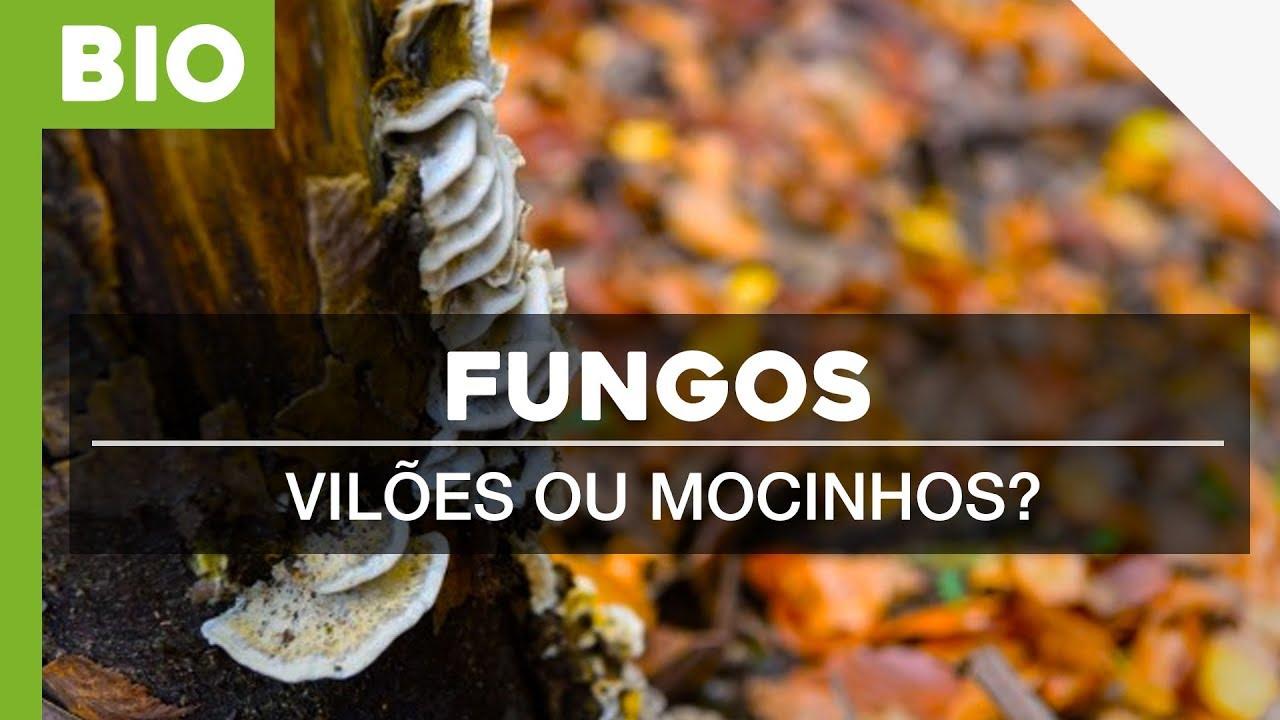 A Vida Secreta Dos Fungos Viloes Ou Mocinhos Youtube