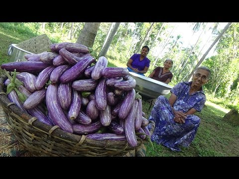 Eggplant Fingers ❤ Eggplant (Brinjal) Fry Recipe by Grandma and Family | Village Life