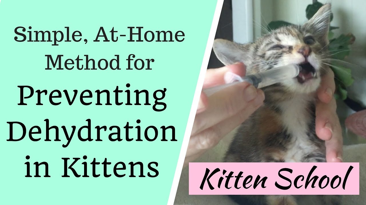 At Home Method To Prevent Deadly Dehydration In Kittens Youtube
