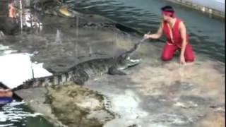 Epic Fail Crocodile Show