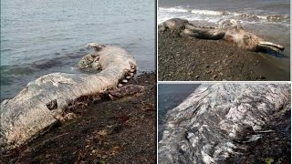 A Furry Dolphin? Strange Sea Creature with