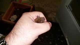 Bat Bites Me After Flying Around House