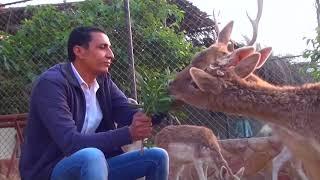 مصر || الغزال العربي يأثر بجماله القلوب والعيون معاً ، في صحراء الشرقية الريم يتأنق