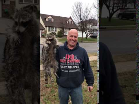 Nassau County Animal Control Wildlife Removal