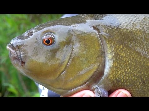 Tench Fishing - Time For Tench Part One