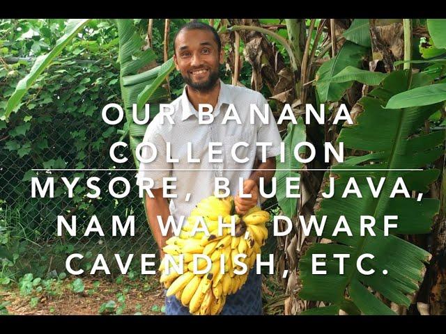 Our Banana collection 2020