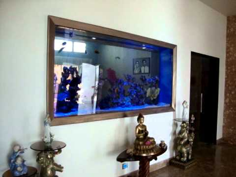 Aquarium Design India Chennai Marine Aquarium Designed By Jabbar  Cell: 9840 71 74 97