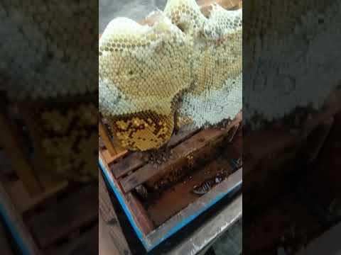 little beekeeping- kuppam honey industries