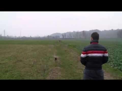 Video del campione volo acrobatico elicottero rc TONY