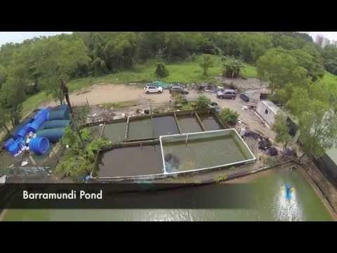 FishingKaki.com - Barramundi Pond Singapore CNR