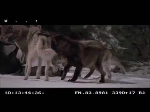 Frozen 2010 Uncut Wolf Attack Edited