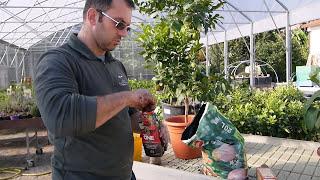 Popular Videos - Plant & Garden
