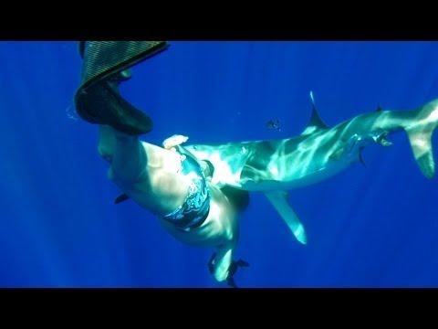 Oceanic Whitetip Shark Bites Diver