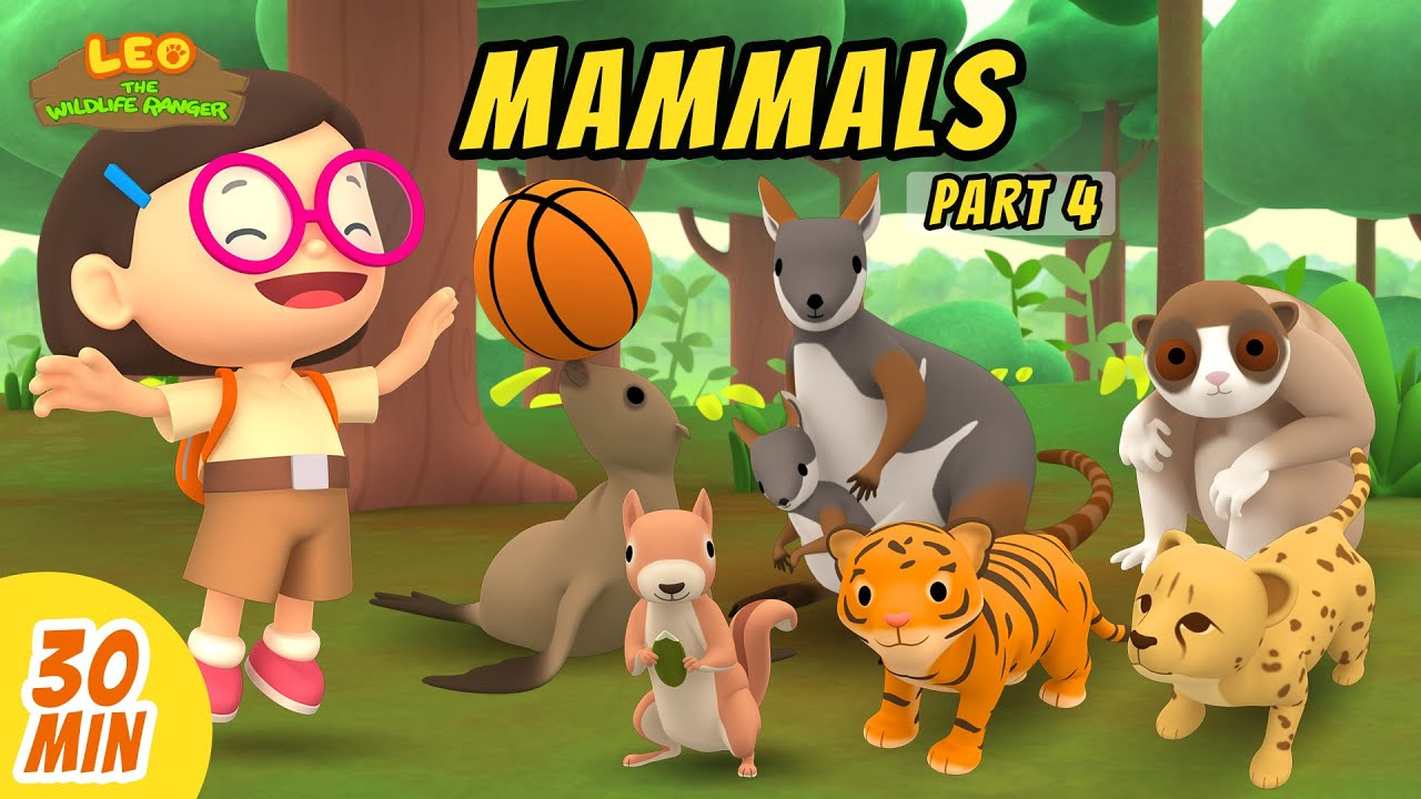 Mammals Minisode Compilation (Part 4/5) - Leo the Wildlife Ranger | Animation | For Kids