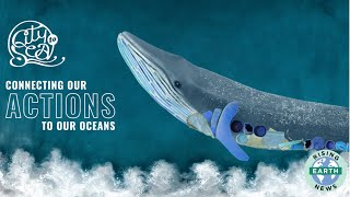 HOW CAN WE SAVE OUR OCEANS?