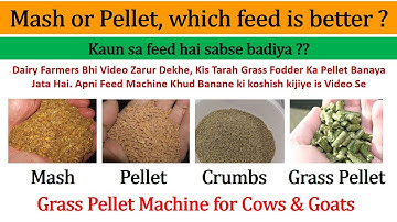 Mash or Pellet Which Feed is Better?   Make, Mash & Pellet Machines   Pellets for Dairy Cows & Goats