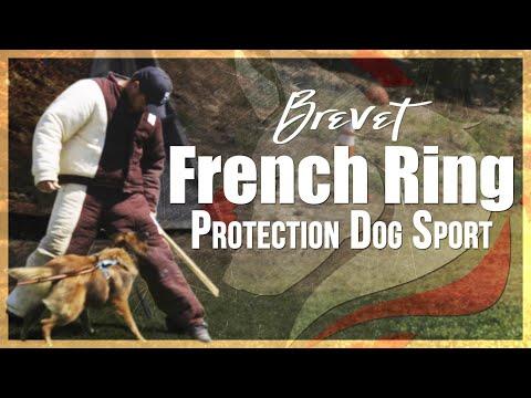 The Brevet | French Ring Protection Dog Sport