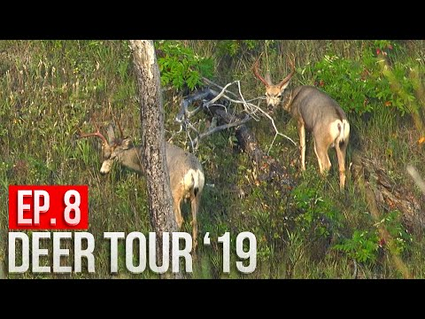 SPOT AND STALK MULE DEER! - Can Grant Close The Distance?!   Nebraska Public Land Bowhunting