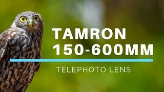 Tamron 150-600mm f/5-6.3 Di VC USD Super Telephoto Zoom Lens review and photo samples