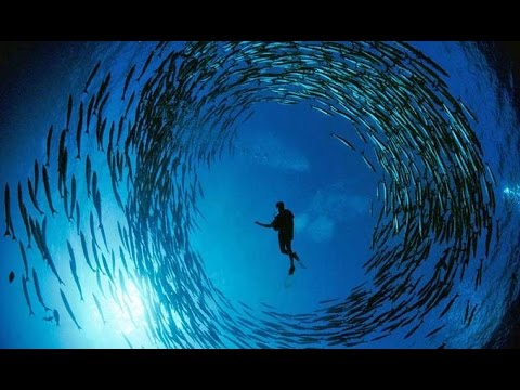 Hin Daeng - Scuba Diving Thailand | Underwater HD by Scuba Explorer