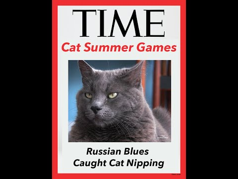 Catnip Doping Scandal Russian Blue Cat