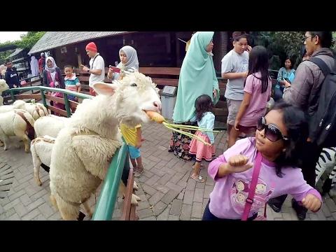 Dikejar Domba, main kelinci, flying fox dan Tangkuban Perahu | Holiday Bandung