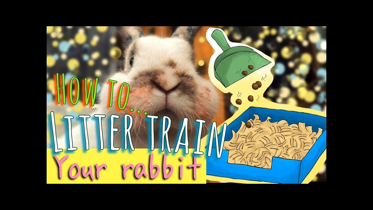 How to Litter Train a Rabbit with Pictures   wikiHow