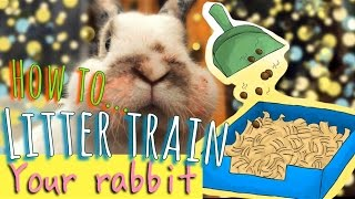 How to litter train your rabbit + bunny life hacks