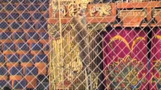 Детский сад Циркового шоу Гии Эрадзе