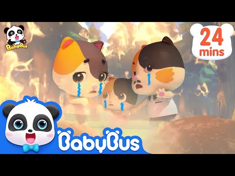 Baby Kitten's Daddy Got Injured in Forest Fire | Super Panda Rescue Team | Kids Song|BabyBus Cartoon