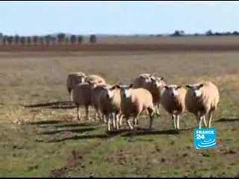 Australia - Farming: Genetically modified profits
