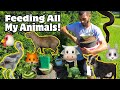 FEEDING ALL MY PETS In ONE VIDEO! (Daily Routine)