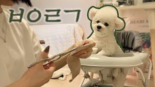 보행기 타고 밥 먹는 강아지  • 지미