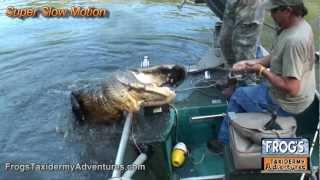 webisode 8 bam barely walks away from a georgia gator hunt