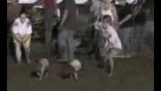 New Haven Youth Fair Pig Scramble