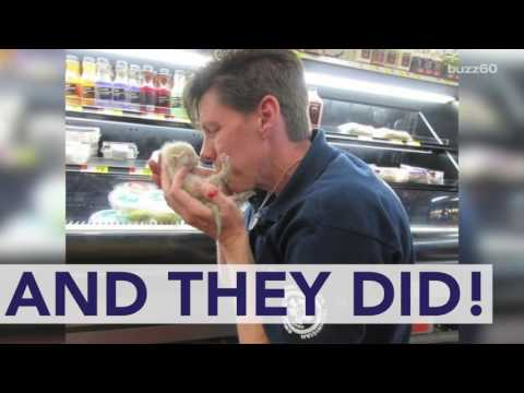 Crying Kittens Rescued from Under Walmart Refrigerator