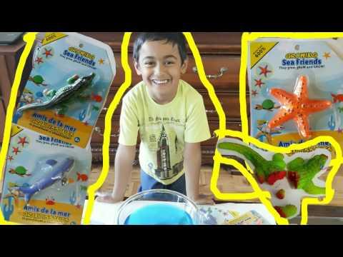 Growing Sea Friends Animal Shaped Orbeez Preschooler Indoor Water Activity Fun Hunter Kids