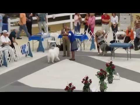 Conformation Dog Show 2014