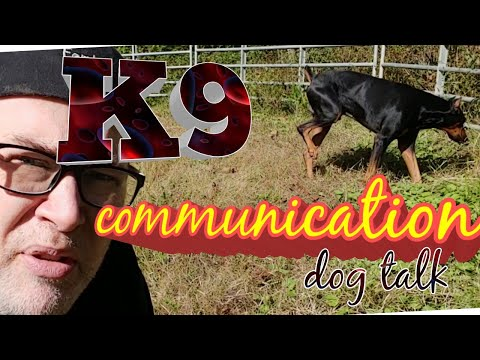 Doberman Pinscher Vlog - Communication of Pee - Dog Social Media