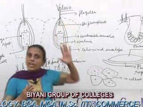 Volvox Lecture Bsc Msc By Dr Anupama Goyal Youtube