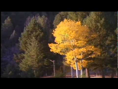 Mannheim Steamroller - Yellowstone: The Musice of Nature - Morning