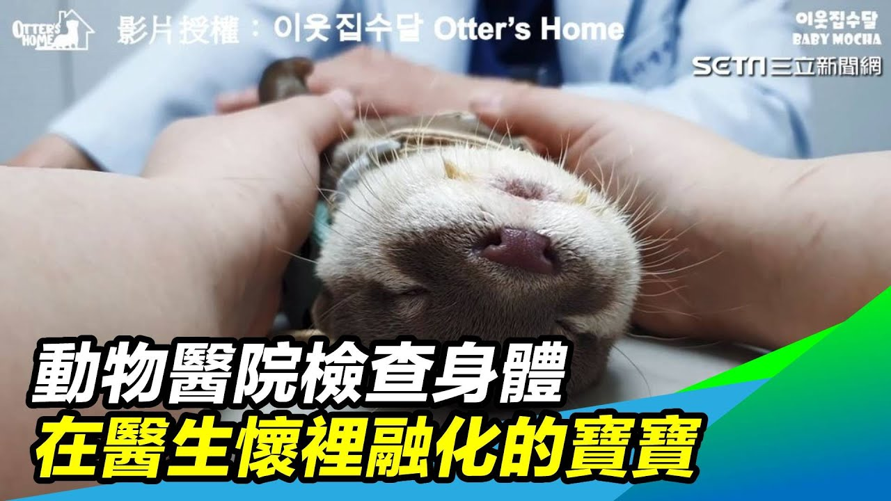 Download 動物醫院檢查身體 在醫生懷裡融化的寶寶 三立新聞網 SETN.com