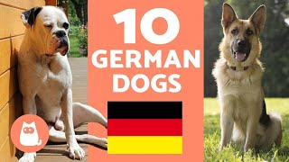 TOP 10 Most Popular German Dog Breeds
